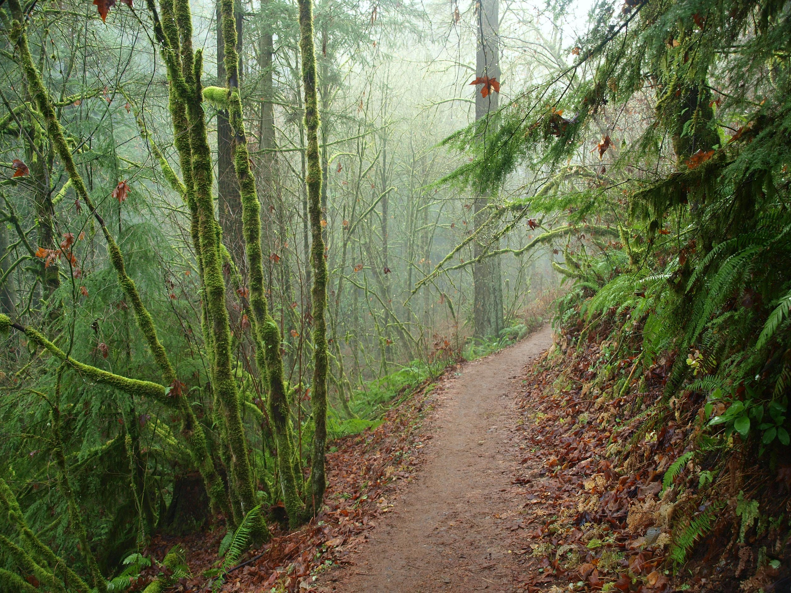 action request forest park use meeting oregon equestrian trails